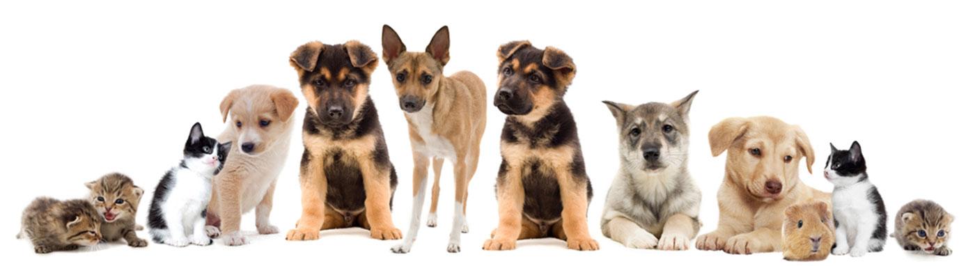 Special Financing Petland Racine Wisconsin Pet Store