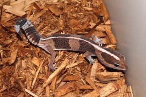 Reptiles Available For Sale - Petland Racine, Wisconsin Pet Store