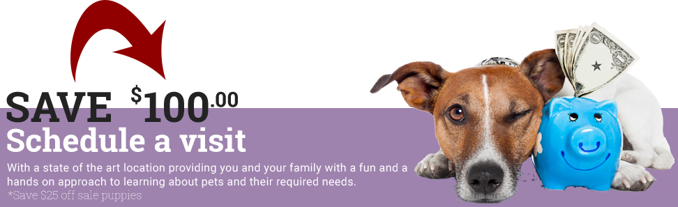 Petland Racine, Wisconsin - Premium Pets & Supplies for Purchase